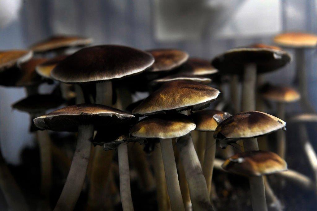 Grand Mushrooms